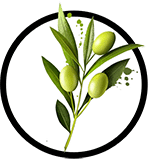 Organic Olive Oil as Ingredient in Organic Body Lotion