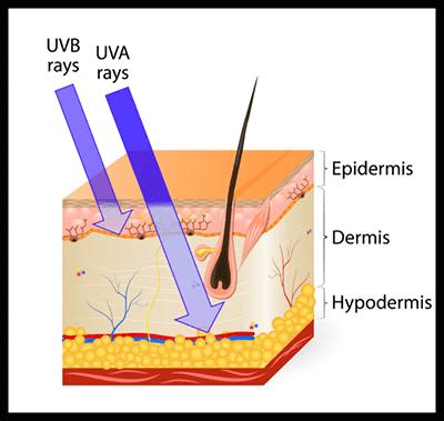 uva-vs-uvb-rays_400px-min